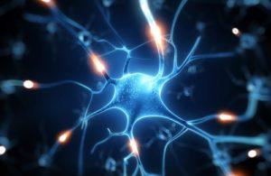 L'intelligence mycélienne